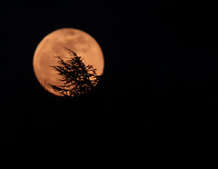 Full moon rising (mkk707) Tags: canoneos1200d leitzmrtelytr500mmf8 moon fullmoon supermoon moonrise astrophotography night sky