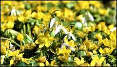Beginning of spring (Ioan BACIVAROV Photography) Tags: paris natura nature green flower flowers fleur fleurs floare flori season anotimp