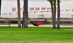 Hammock in The Park (The Vintage Lens) Tags: hammock peaceful relaxintranquil