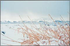 Snow is falling down_Leica M4 (ksadjina) Tags: 24x36 c41 christmas2014 kodakportra400 leicam4 leitzsummicronm50mmf12 nikonsupercoolscan9000ed norway silverfast vigra analog beach color film scan snowstorm winter