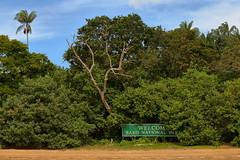 Welcome Bako National Park (_JLC_) Tags: bako bakonationalpark borneo kuching sarawak asia malasia malaysia sudesteasiático naturaleza nature fantasticnature fauna wildlife canon canon6d 6d eos jungla jungle forest selva paisaje landscape paesaggio 70200f4is 70200