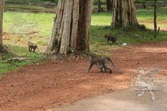 Angkor_Siem Reap_2014_18