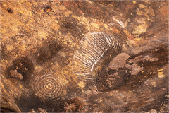 Paintings . The Uluru (:: Blende 22 ::) Tags: paintings aborigines malerei base walk australia australien nothernterritory outback olgas katatjuta uluru ayersrock basewalk redrocks redcentre rocks bluesky canoneos5dmarkiv ef2470mmf28liiusm