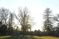 IMG_8559 (Pfluegl) Tags: wien vienna zentralfriedhof graveyard europe eu europa österreich austria chpfluegl chpflügl christian pflügl pfluegl spring frühling simmering