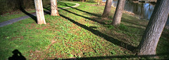 The Tree Line (selyfriday) Tags: selyfriday wwwnassiocomempty nassiocom minolta riva panorama film 35mm analogue minoltarivapanorama agfa200xrg tetenalc41 tetenalc41kit netherlands dutch nederland holland zaandam zaans gouw trees tree lines