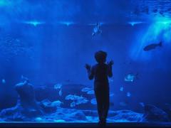 El niño del agua (Jaime A Ballestero) Tags: jaimea azul acuario agua vida silueta niño sevilla