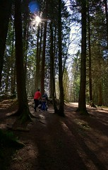 Walk in the Woods (matthewblackwood10) Tags: walk woods forrest woodland walking hike stroll stroller pram baby tree shadow light lights sun beam beams day daytime spring scotland uk east kilbride calderglen country park trail path people trunk trunks trees