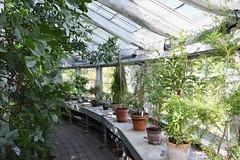 Greenhouse Path (Bri_J) Tags: copenhagenbotanicalgarden botaniskhave universityofcopenhagen copenhagen denmark københavn danmark butterflyhouse greenhouse