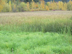 Preserved wetland (jamica1) Tags: salmon arm shuswap bc british columbia canada trees grass