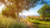 Hello! (Jeffrey Bos) Tags: landscape nature sun hawaii kauai hiking