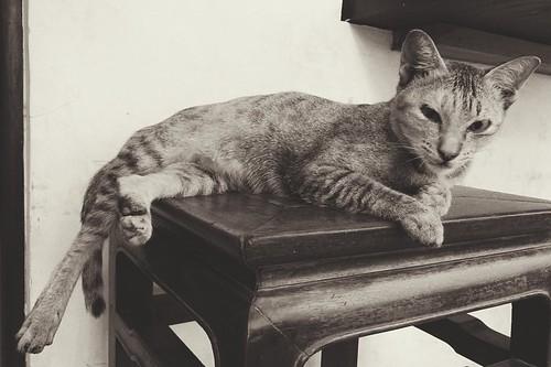 Cat @ Tini coffee Phnom Penh