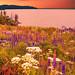 Yellowstone Spring