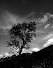 Black and White Tree, The Lake District, UK. (RichardByers01) Tags: blackandwhite monochrome mountainscape mountain mountaineering climbing trees trekking travelphotography adventure clouds sky silhouette shape shapes naturalworld nature hill lakedistrict cumbria england uk keswick