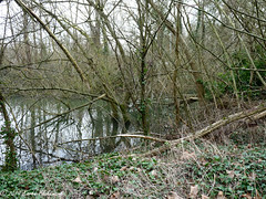 Challenge Friday 2019, week 9, theme stream (3) - Fallen branches and trees blocking the stream (karenblakeman) Tags: caversham uk challengefriday cf19 stream trees water 2019 march reading berkshire