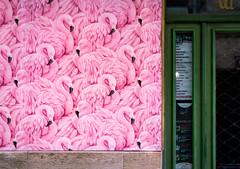 Flamingo (Alexandra Kfr) Tags: city photography street door shop flamingo contrast pink green colours bordeaux france wall streetart