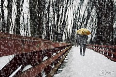 """Entre les flocons ... ( P-A) Tags: hiver neige passerelle rapidesdeschênes flocons balade marche sentier forêt décor beauté nikond800 photos simpa© """"nikonflickraward"""" photoquébec"""