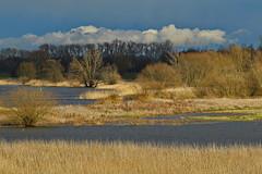 """Flusslandschaft Elbe"" (blacky_hs) Tags: elbe fluss strom wasser water river landschaft"