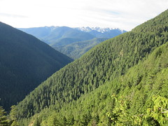 scenic viewpoint in Olympic national park (Prairie Star) Tags: valley ridge mountain trees mountains landscape nationalparkservice usa nationalpark washington westernstates unitedstates nationalparks washingtonstate olympicnationalpark summer sunshine forest tree mountainside sunny rural