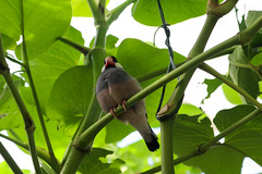 Vacances_0868 (Joanbrebo) Tags: mainau konstanz badenwürttemberg de deutschland canoneos80d eosd autofocus ocells pájaros birds animals animales