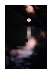 2018/11/25 - 21/21 END. photo by shin ikegami. - SONY ILCE‑7M2 / Voigtlander NOKTON CLASSIC 40mm f1.4 SC VM (shin ikegami) Tags: silhouette シルエット sunset 夕陽 macro マクロ 井の頭公園 吉祥寺 autumn 秋 sony ilce7m2 sonyilce7m2 s7ii 40mm voigtlander nokton nokton40mmf14sc tokyo photo photographer 単焦点 iso800 ndfilter light shadow 自然 nature 玉ボケ bokeh depthoffield naturephotography art photography japan earth asia