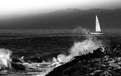 sail and sea (robertoburchi1949) Tags: sea seascape blackwhite bianconero vele sailboat water waves