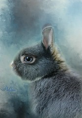 Miniature Netherland Dwarf Bunny (Explored) (Patlees) Tags: miniaturenetherlanddwarf rabbit textured photobypixabay dt explored frontpage freestockbunny