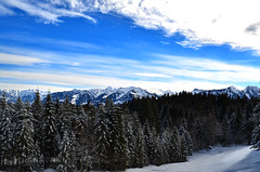 Giswil OW - Winterwald (pe_ma) Tags: hike schneeschuh snow obwalden schnee winter