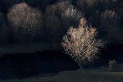 Lit (RubénRamosBlanco) Tags: naturaleza nature plantas plants árboles trees invierno winter river riverbank ribera luz light atardecer sunset jarama madrid españa spain