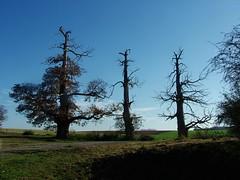 Waterloo 3 (leobos) Tags: hiking nature trees september waterloo brabant belgium