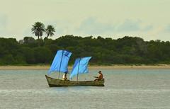 Sails (Márcia Valle) Tags: barradecaravelas caravelas bahia inspirações mar sea verão summertime márciavalle nikon d5100 nature natureza brasil brazil bluesails velasazuis velas