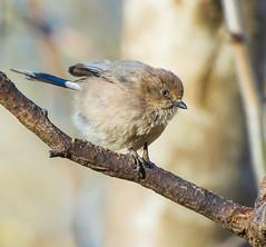 Pregnant again. (Omygodtom) Tags: wildlife bird pregnant natural nature nikkor d7100 dof bokeh usgs nikon70300mmvrlens oaksbottom