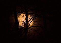 W księżycową jasną noc // A Midnight Clear (stempel*) Tags: polska poland polen polonia gambezia pentax k30 noc night księżyc moon tree drzewo bigma olchy dark