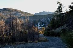 Chemin de montagne (RarOiseau) Tags: hiver chemin hautesalpes rochebrune forêt soir saariysqualitypictures