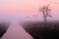 19040031 (felipe bosolito) Tags: tree solitude silence morning dawn sunrise canal water fog fuji xpro2 xf1655 velvia
