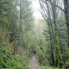 City Limits (Aaron Bieleck) Tags: hasselblad500cm 120film analog 6x6 square film filmisnotdead hasselblad mediumformat wlvf fujipro400h hiking forestpark forest sarah 60mmct pnw pacifcnorthwest