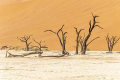 _RJS4634 (rjsnyc2) Tags: 2019 africa d850 desert dunes landscape namibia nikon outdoors photography remoteyear richardsilver richardsilverphoto safari sand sanddune travel travelphotographer animal camping nature tent trees wildlife