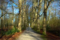 bare trees.......... (atsjebosma) Tags: trees wood bare takken kaal bomen bos branches atsjebosma landgoed nienoord countryestate leek groningen thenetherlands februari 2019 coth5