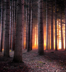 First Light (keesvandongen) Tags: sunset sunrise dusk dawn naturephotography nature mood light sunlight warm mist misty fog foggy water channel landscape landscapephotography skyscape sky night keesvandongen keske thenetherlands trees woods tree wood twilight forest