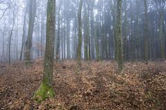Only the mist (Fabien Husslein) Tags: mist fog brouillard forte forest wood trees arbres winter hiver nature landscape paysage bois letzebuerg luxembourg luxemburg