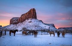 Horses below the Sundial at Dawn (Bill Bowman) Tags: dawn sunrise canyonlands canyonlandsresearchcenter thesundial bridgerjackmesa dugoutranch utah needlesdistrict
