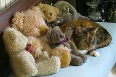Gracie 24 January 2019 2349Ri 4x6 (edgarandron - Busy!) Tags: cat cats kitty kitties tabby tabbies cute feline