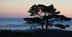 Despertar azul/  Blue morning (PURIFM) Tags: sunrise galicia tree blue outside ourense fog mountain landscape