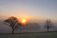 Morgenstimmung (Mariandl48) Tags: sonnenaufgang morgenstimmung vögel sommersgut wenigzell steiermark austria