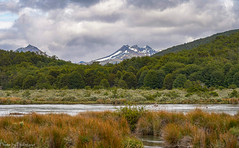 At the river... / На реке... (Vladimir Zhdanov) Tags: travel argentina tierradelfuego lapataia nature landscape river water sky cloud mountains mountainside snow grass field tree forest ushuaia wood