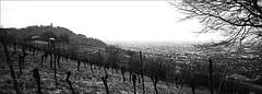 auf das die rebe noch lange lebe (fluffisch) Tags: fluffisch heppenheim starkenburg bergstrase hasselblad xpan panorama 45mmf40 rangefinder messsucher analog film adox cms20ii