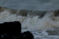IMG_0693 (monika.carrie) Tags: monikacarrie wildlife scotland aberdeen waves