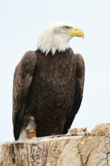 IMG_1450 (Stefan Kusinski) Tags: hemsley duncombe ncbp birdofprey