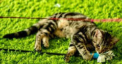 Cat cafe (geetarchick65) Tags: catphotos catphotography cute catpictures kittens kitten catcafe cat amatuerphotography beginner green color