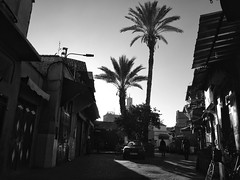 Sunrise in Marrakesh (MsStarious) Tags: marrakech morrocco marrakesh blackandwhite bw palmtree street souk medina africa streetphotography