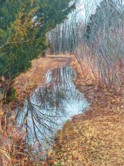 20190115-060054-2 (alnbbates) Tags: january2019 trails reflections trees hdr